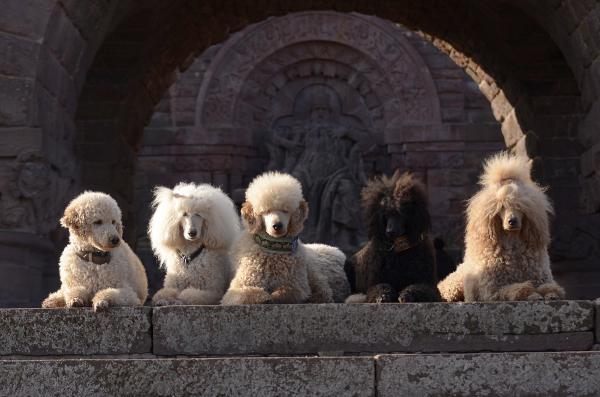 Die Könige vom Falbenhof